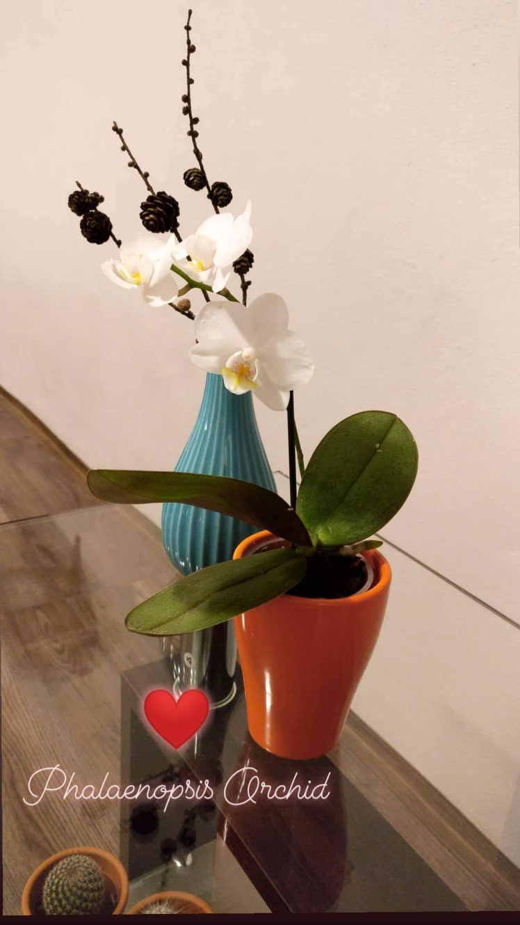 29th Oct'18 Orchid special