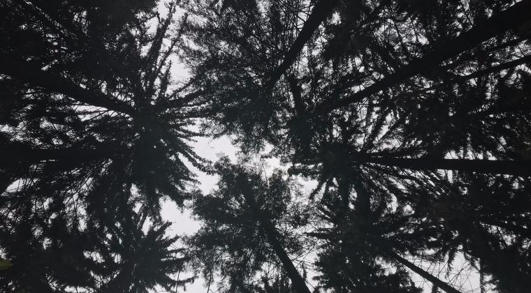 trees are the best teacher