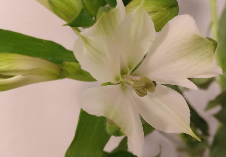 peace in flower